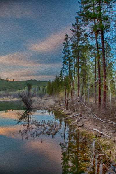 Photograph - Evening On The Banks Of A Beaver Pond by Omaste Witkowski