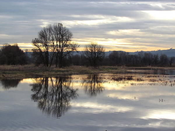 Wall Art - Photograph - Evening On The Refuge by Angie Vogel