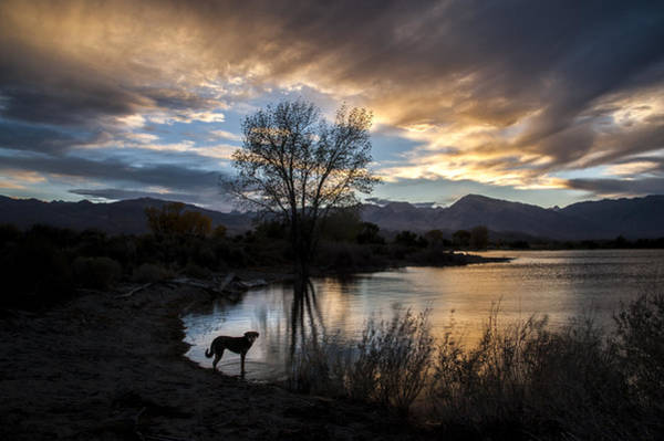 Photograph - Evening Silhouettes by Cat Connor