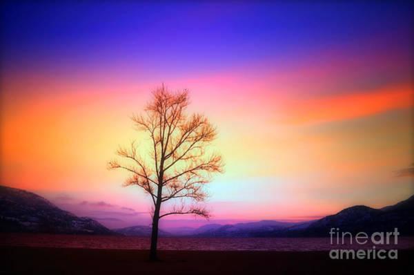 Photograph - Evening Sky by Tara Turner