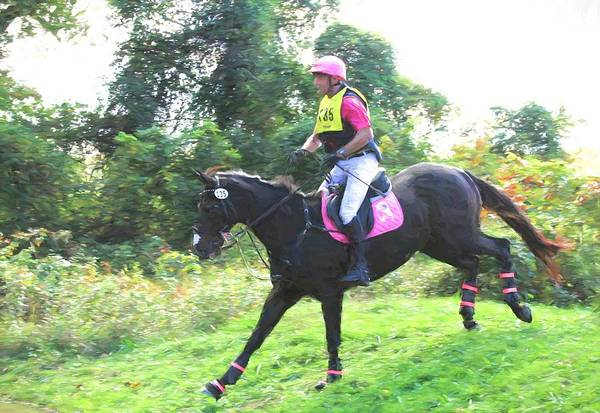 Fairhill Photograph - Eventing Pink by Alice Gipson