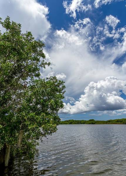 Photograph - Everglades 0266 by Rudy Umans