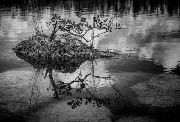 Photograph - Everglades 0346 by Rudy Umans