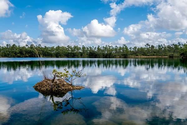 Photograph - Everglades 0347 by Rudy Umans