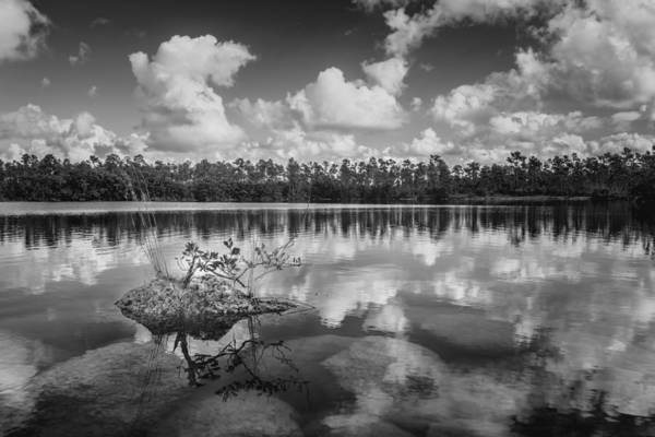 Photograph - Everglades 0347bw by Rudy Umans