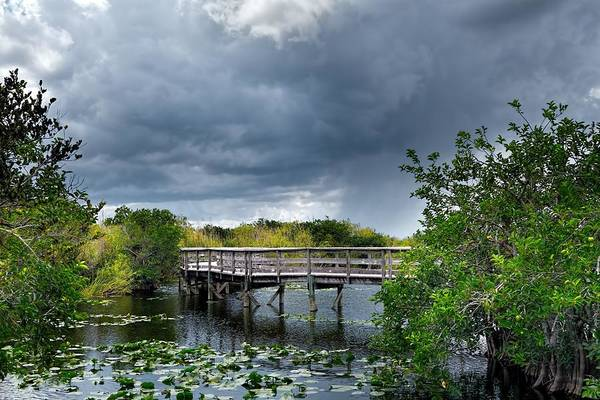 Photograph - Everglades 0823 by Rudy Umans