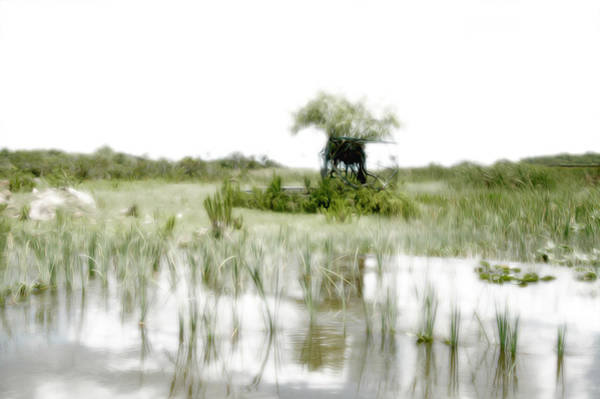 Airboat Photograph - Everglades 3 by Tracy Winter