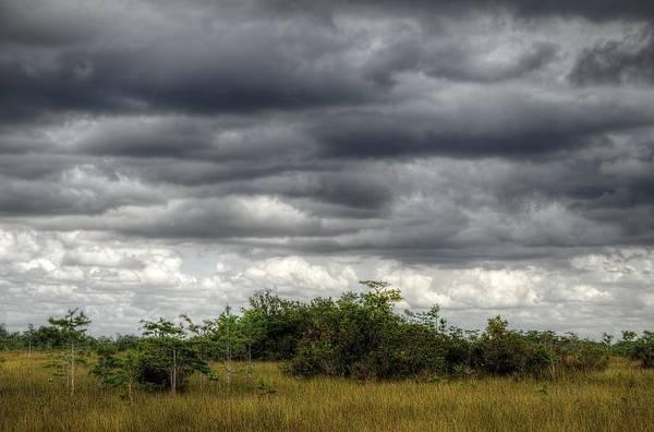 Photograph - Everglades 6892 by Rudy Umans