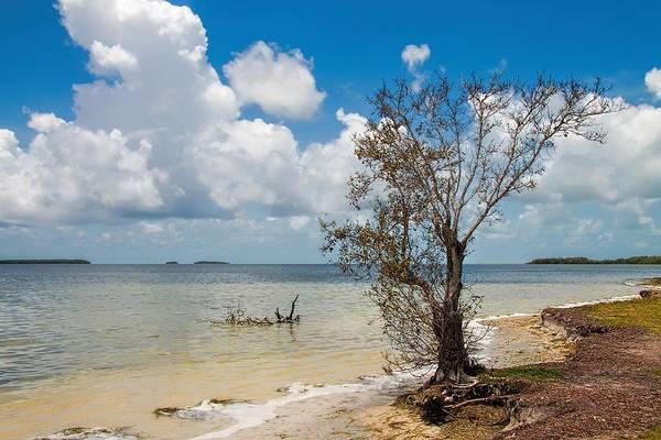 Photograph - Everglades 6953 by Rudy Umans