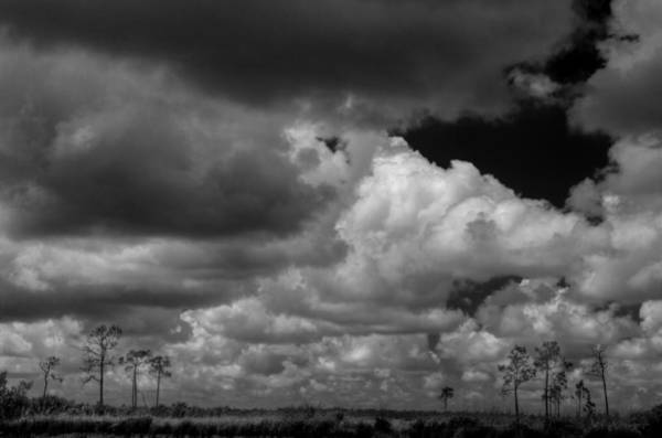 Photograph - Everglades Clouds 6873 Bw by Rudy Umans