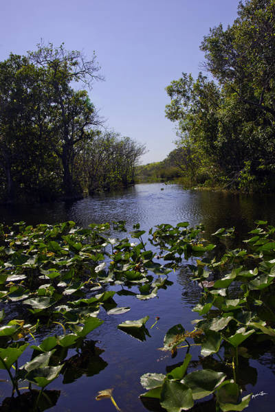 Wall Art - Photograph - Everglades In Perspective - Florida by Madeline Ellis