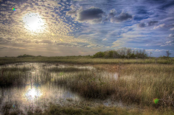 Wall Art - Photograph - Everglades In Winter by William Wetmore