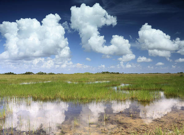 Everglades National Park Photograph - Everglades Landscape With Clouds Reflection by Rudy Umans