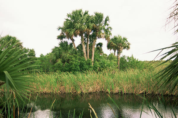 Everglades National Park Photograph - Everglades Marshland by Jim Edds/science Photo Library