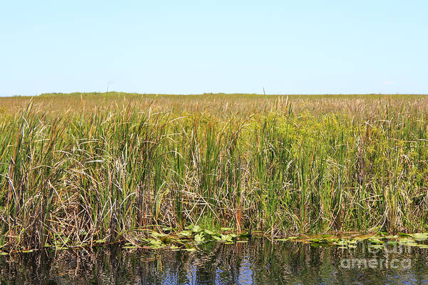I-75 Photograph - Everglades National Park by Lee Serenethos