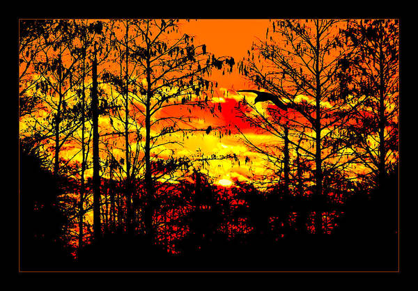Photograph - Everglades On Fire by Jody Lane