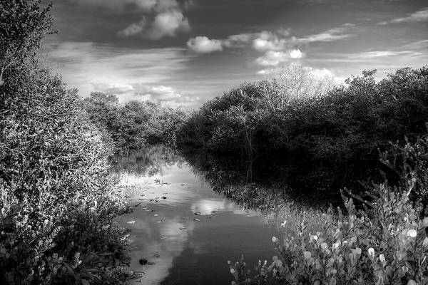 Wall Art - Photograph - Everglades Pond by William Wetmore