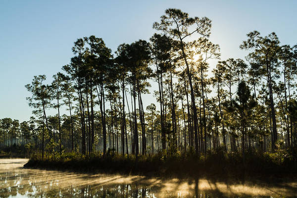 Everglades Sunrise Art Print