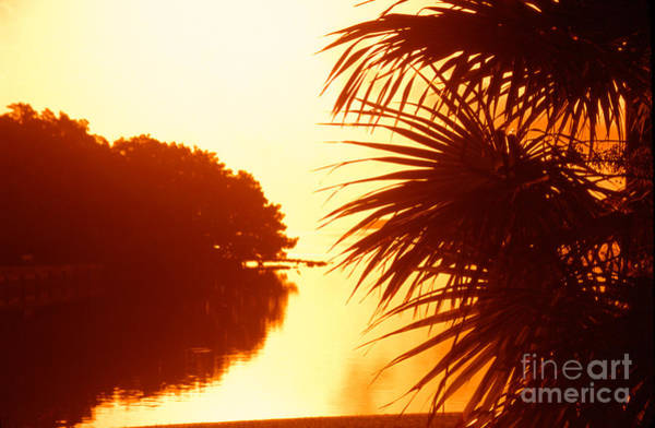 Photograph - Everglades Sunrise by Thomas R Fletcher