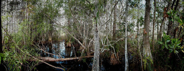 Refuge Wall Art - Photograph - Everglades Swamp-1 by Rudy Umans