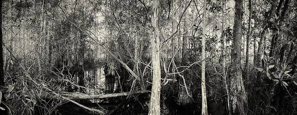 Photograph - Everglades Swamp-1bw by Rudy Umans