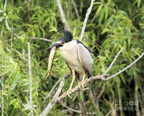 Photograph - Everglades Treat by Adam Jewell