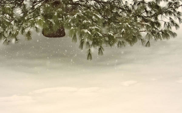 Photograph - Evergreen In A Snowfall by Nancy De Flon