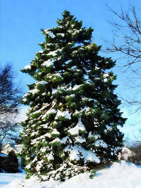 Photograph - Evergreen In Winter by Susan Savad