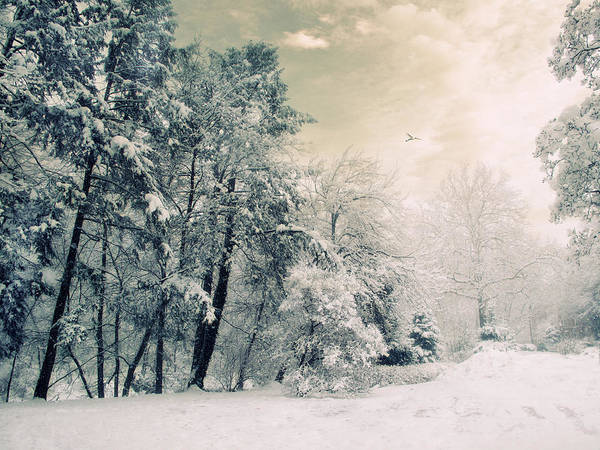 Photograph - Evergreen by Jessica Jenney