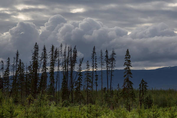 Photograph - Evergreen Storms by Ryan Heffron