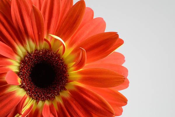 Photograph - Every Flower... by Melanie Moraga