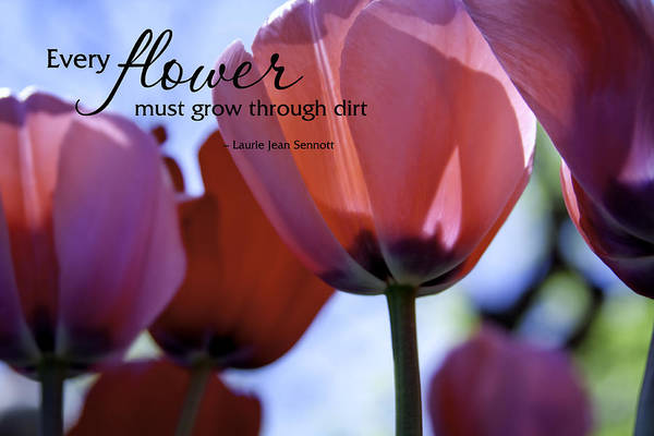 Photograph - Every Flower Must Grow Through Dirt by Teri Virbickis