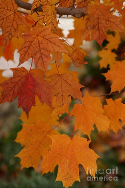 Photograph - Every Leaf Speaks Bliss To Me by Linda Shafer
