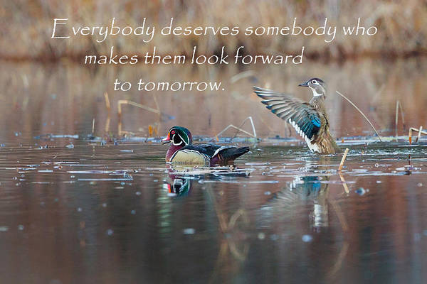 Photograph - Everybody Deserves Somebody by Bill Wakeley