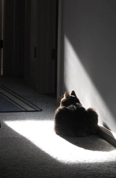 Photograph - Everybody Needs A Sunny Spot by Louise St Romain
