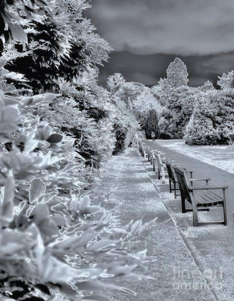 Photograph - Everyones Park by Lance Sheridan-Peel