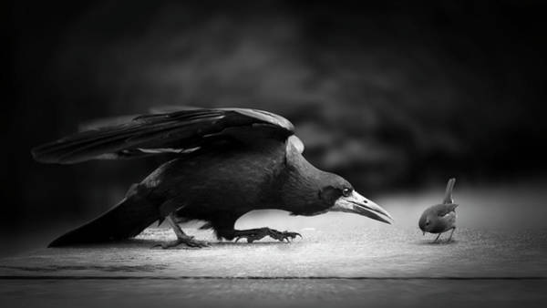 Beak Photograph - Evil by Richard Bires