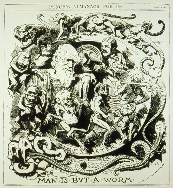 Evolution Photograph - Evolutionary Cartoon Taken From Punch's Almanack by Science Photo Library