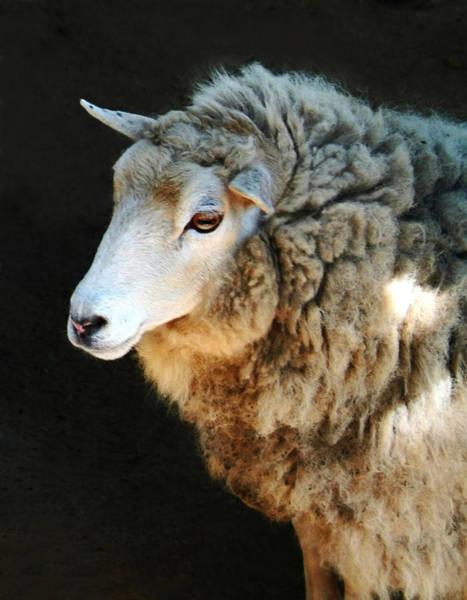 Ovine Photograph - Ewe Are So Beautiful by Ellen Henneke