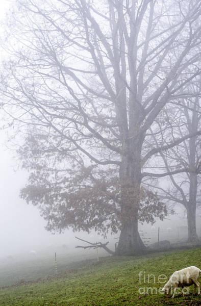 Photograph - Ewe Foggy Day by Thomas R Fletcher