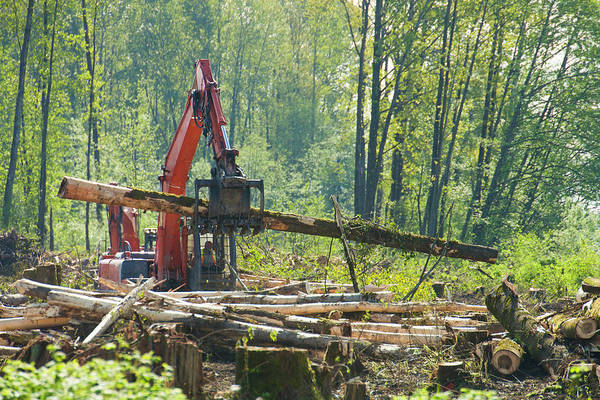 Metro Vancouver Wall Art - Photograph - Excavator Moving Cut Logs For New by Christopher Kimmel