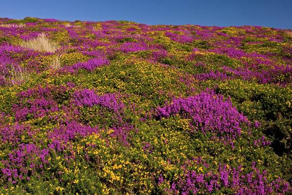 Moorland Photograph - Exmoor by Bob Gibbons/science Photo Library