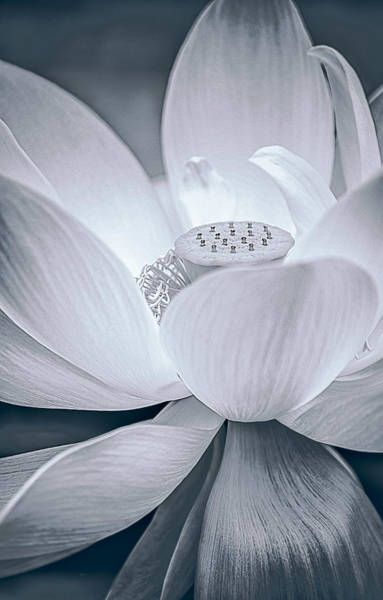 Photograph - Exotic Bloom In White by Julie Palencia