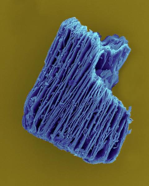 Flammable Photograph - Expanded Vermiculite Pellet by Dennis Kunkel Microscopy/science Photo Library