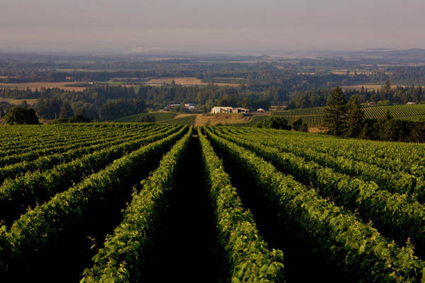Photograph - Exploring Oregons Wine Country by George Rose