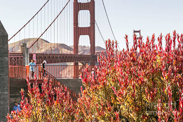 Photograph - Exploring The Golden Gate Bridge by Kate Brown
