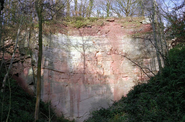 Tree Face Photograph - Exposed Sandstone At A Disused Quarry by Robert Brook/science Photo Library