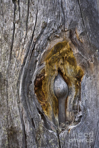 Photograph - Expressive Trunk by Heiko Koehrer-Wagner