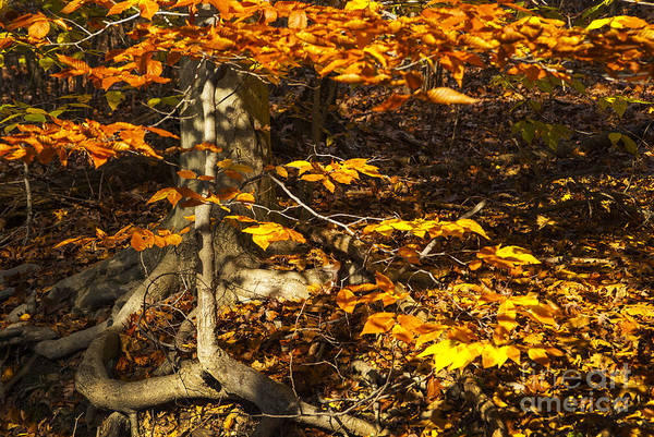 Photograph - Extra Branch by Paul W Faust -  Impressions of Light