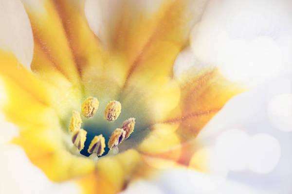 Extreme Close-up Of Flower Pollen Art Print by Massimiliano Ranauro / EyeEm